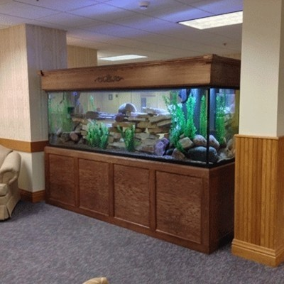 "180 Gallon* Glass Aquarium - 24""H x 72""L x 24""D"