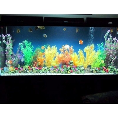 240 gal glass aquarium 30 h x 72 l x 24 d. Black Bedroom Furniture Sets. Home Design Ideas