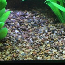 Flint Aquarium Gravel - Per 1Lb