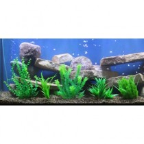 Aquarium Plants Sm 7-10 for Aquariums