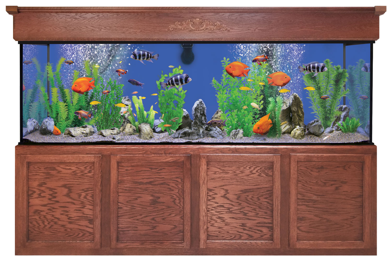 300 Gallon Aquarium - Custom Glass Fish Tank | Custom Aquariums