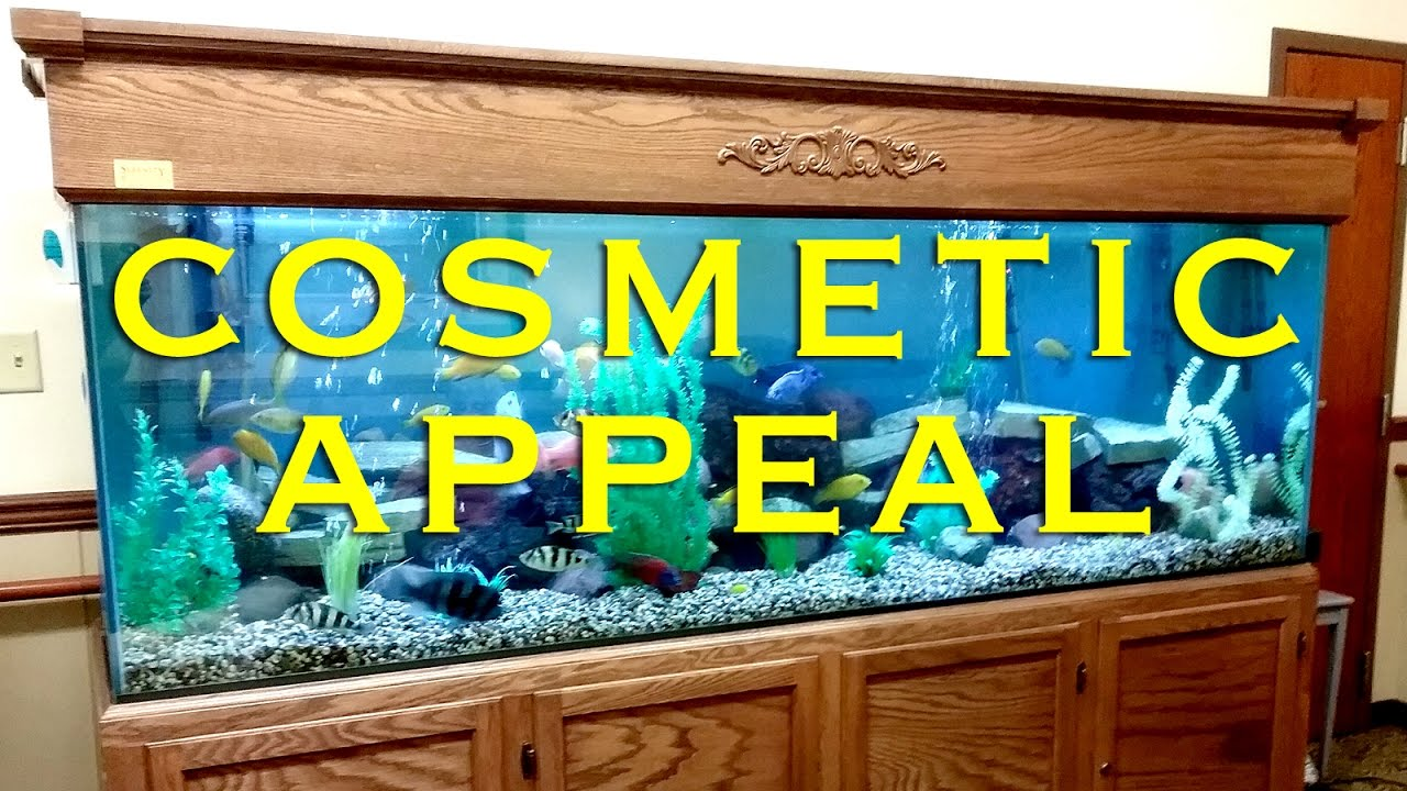 Advanced Aquarium Engineering - Custom Aquariums