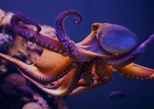 Octopus Aquariums - Octopus Tanks