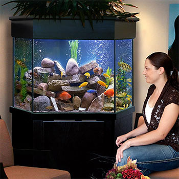 Pentagon Aquariums Corner Aquariums Custom Aquariums
