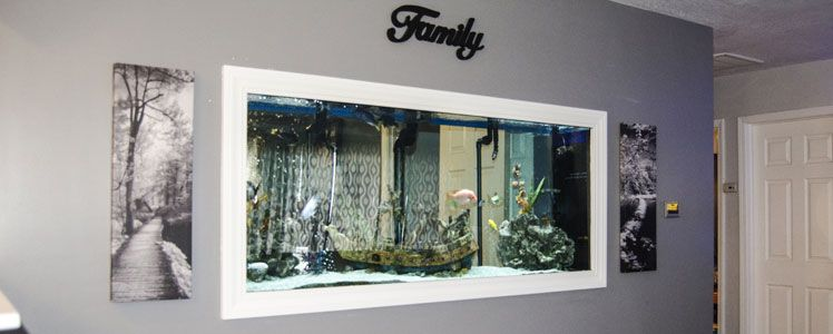Custom Aquariums, Glass Fish Tanks, DIY Aquariums, Saltwater
