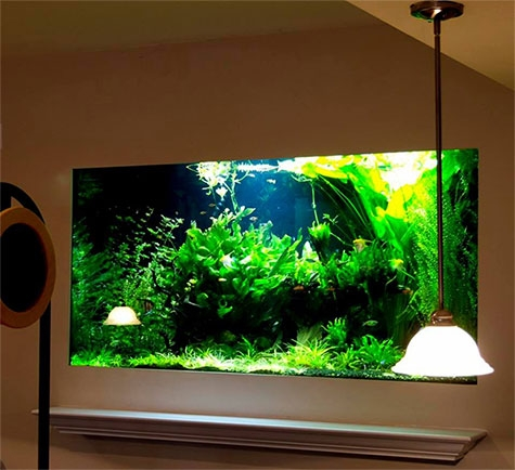 aquariums for banks