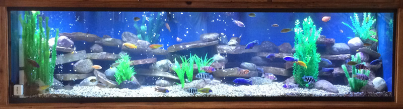Custom Aquariums Gallon Tank