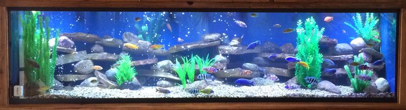 Lifetime Glass Aquariums