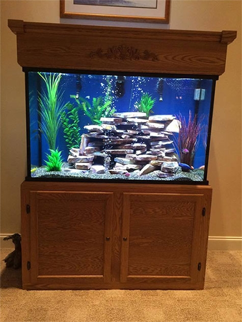 aquariums for retirement homes