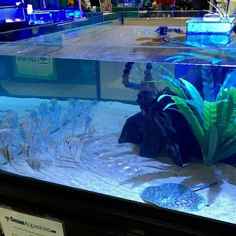 aquariums for stingrays